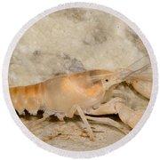 Miami Cave Crayfish Round Beach Towel