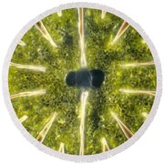 Micrasterias Round Beach Towel by Michael Abbey and Photo Researchers