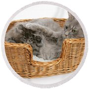Mother Cat With Kitten Round Beach Towel
