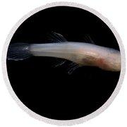 Ozark Cave Fish Round Beach Towel