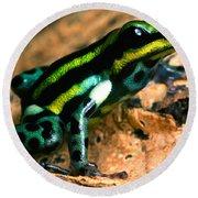 Pasco Poison Frog Round Beach Towel