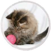 Playful Kitten Round Beach Towel