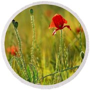 Poppies Round Beach Towel by Guido Montanes Castillo