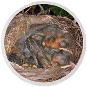 Robin Nestlings Round Beach Towel