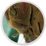 Sem Of A Mutant Fruit Fly Round Beach Towel