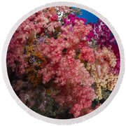 Soft Coral In Raja Ampat, Indonesia Round Beach Towel