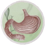 Stomach And Bile Duct Round Beach Towel