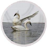 Trumpeter Swans Round Beach Towel