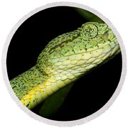 Two Striped Forest Pit Viper Round Beach Towel