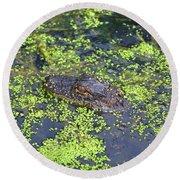 31- Alligator Hatchling Round Beach Towel