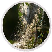 Bird-cherry Ermine Caterpillars Round Beach Towel