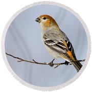 Female Pine Grosbeak Round Beach Towel