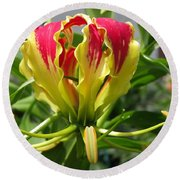 Gloriosa Named Rothschildiana Round Beach Towel