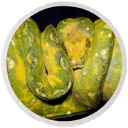 Green Tree Python Round Beach Towel
