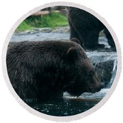 Grizzly Bear Or Brown Bear Round Beach Towel