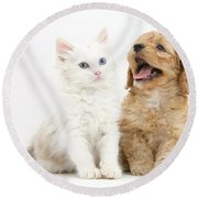 Kitten And Puppy Round Beach Towel