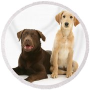 Labradoodle And Labrador Retriever Round Beach Towel by Jane Burton