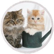 Maine Coon Kittens Round Beach Towel