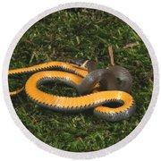 Northern Ringneck Snake Round Beach Towel