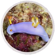 Nudibranch Feeding On Algae, Papua New Round Beach Towel