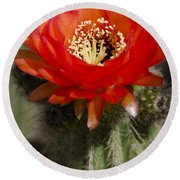 Red Cactus Flower Round Beach Towel