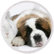 Saint Bernard Puppy With Rabbit Round Beach Towel