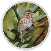 Savannah Sparrow Round Beach Towel