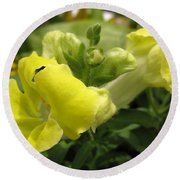 Snapdragon From The Mme Butterfly Mix Round Beach Towel