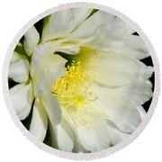 White Cactus Flower Round Beach Towel