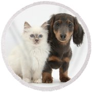 Blue-point Kitten & Dachshund Round Beach Towel