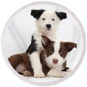 Border Collie Puppies Round Beach Towel