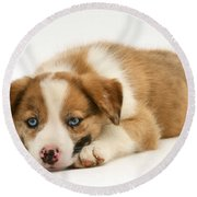 Border Collie Puppy Round Beach Towel by Jane Burton