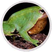 Darwins Frog Round Beach Towel