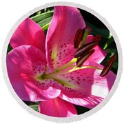Dwarf Oriental Lily Named Farolito Round Beach Towel