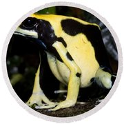 Dyeing Poison Frog Round Beach Towel