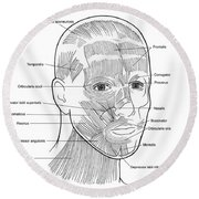Illustration Of Facial Muscles Round Beach Towel