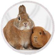Rabbit And Guinea Pig Round Beach Towel
