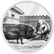 Swine, 19th Century Round Beach Towel