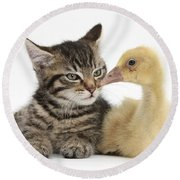 Tabby Kitten With Yellow Gosling Round Beach Towel