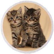 Tabby Kittens Round Beach Towel