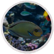 Tropical Fish Round Beach Towel