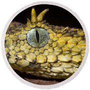 Usambara Eyelash Bush Viper Round Beach Towel