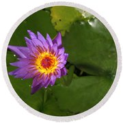 Waterlily Opening Part Of A Series Round Beach Towel