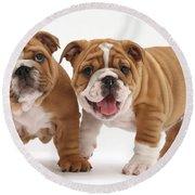 Bulldog Puppies Round Beach Towel