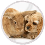 Cocker Spaniel And Rabbit Round Beach Towel
