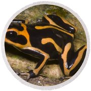 Crowned Poison Frog Round Beach Towel