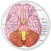 Illustration Of Cranial Nerves Round Beach Towel