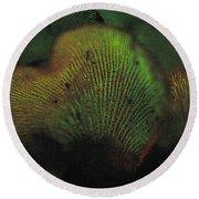 Luminescent Mushroom Panellus Stipticus Round Beach Towel