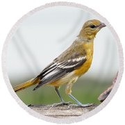 Oriole Round Beach Towel