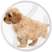 Puppy Round Beach Towel